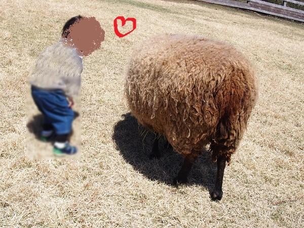 まかいの牧場の羊の放牧エリア